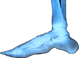 X-Ray-of-foot